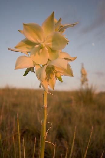 Stock Photo: 1701R-35779 Little Missouri National Grasslands near Bowman, North Dakota, United States of America.