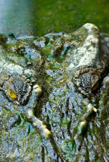 Stock Photo: 1701R-35938 Crocodylus Park, Darwin, Northern Territory, Aust
