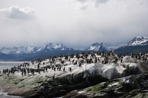 Stock Photo: 1701R-36616 Ushuaia, Tierra del Fuego, Argentina, Beagle Channel