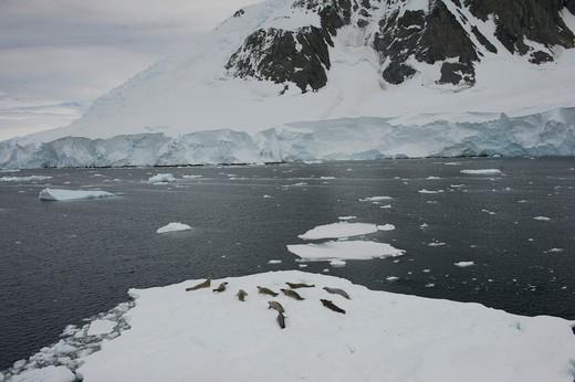 Stock Photo: 1701R-36911 Antarctic Peninsula, Antarctica, Crystal Sound