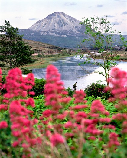 Errigal Mountain, County Donegal, Ireland : Stock Photo