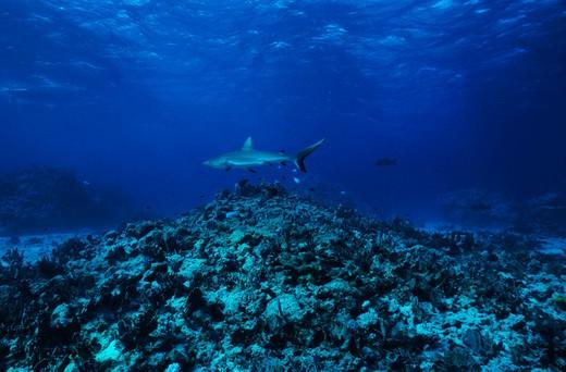 Coral Sea, Queensland, Australia : Stock Photo