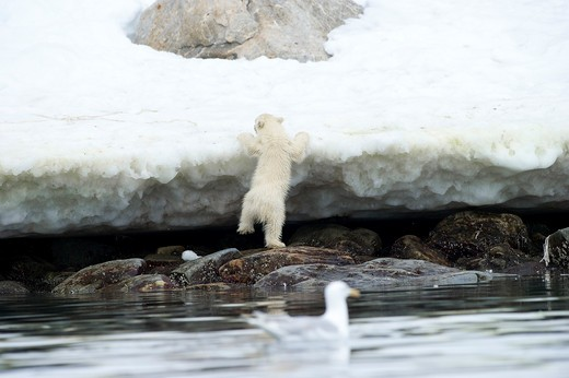 Stock Photo: 1701R-41738 Holmabukta, Svalbard, Norway