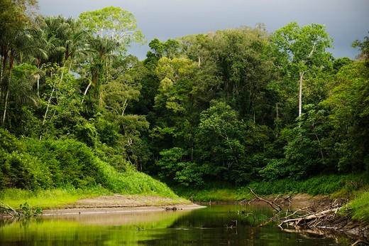 The River Yanuyacu, a tributary of the Amazon, in Pacaya-Samiria National Reserve, near Iquitos, northern Peru. : Stock Photo