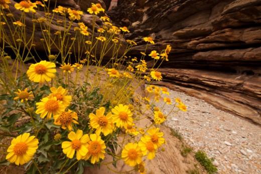 Blacktail Canyon, Grand Canyon, Arizona, United States. : Stock Photo