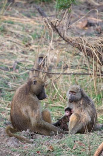 Stock Photo: 1701R-47883 Mosi-oa-Tunya National Park, Zambia.
