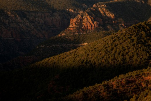 Stock Photo: 1701R-49868 The Coconino National Forest in Arizona.