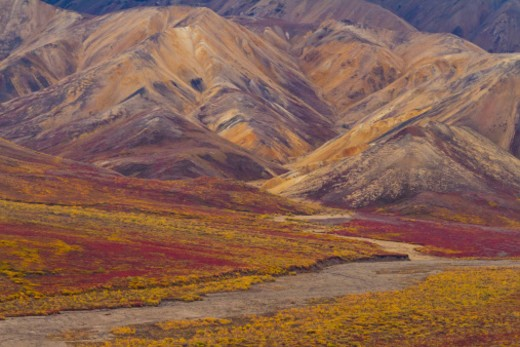 Denali National Park, Alaska, United States. : Stock Photo
