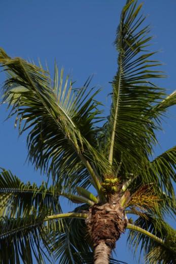 Key Largo, Florida. : Stock Photo