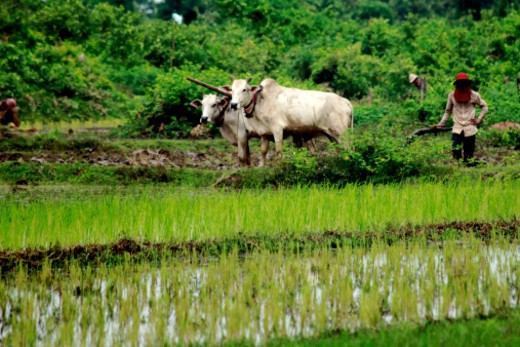 Stock Photo: 1701R-50836 Kampong Cham, Cambodia
