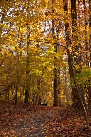 Ohiopyle State Park , Pennsylvania , United States : Stock Photo