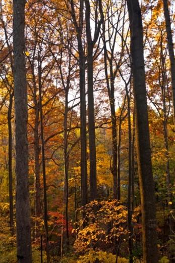Stock Photo: 1701R-51928 Ohiopyle State Park , Pennsylvania , United States