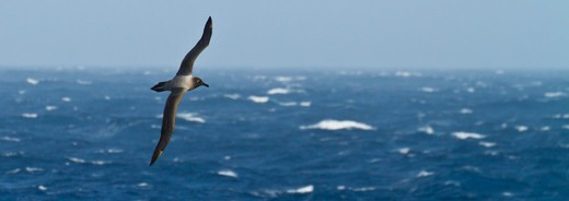 Southern Ocean, Antarctica. : Stock Photo