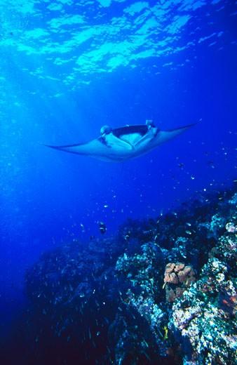 Mexico, Baja California, Sea of Cortez : Stock Photo