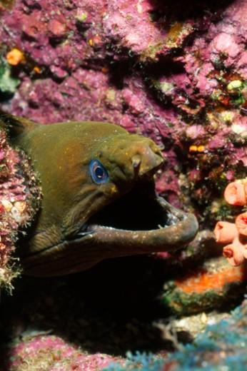 Stock Photo: 1701R-5492 Mexico, Baja California, Sea of Cortez
