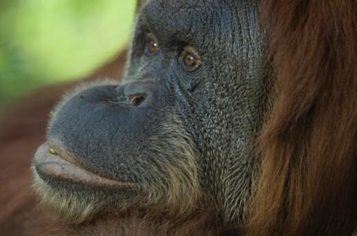 Stock Photo: 1701R-5945 The Sedgwick County Zoo, Wichita, Kansas, United States of America.