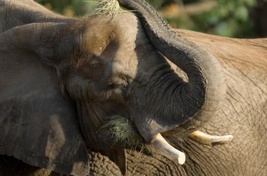 The Sedgwick County Zoo, Wichita, Kansas, United States of America. : Stock Photo
