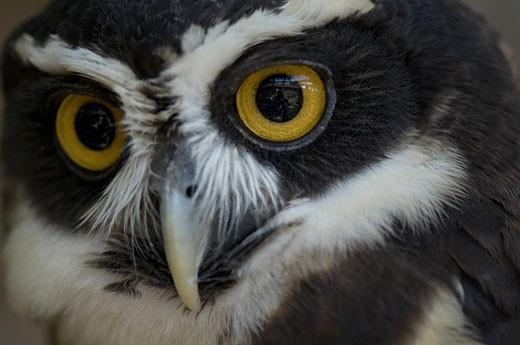 Stock Photo: 1701R-7528 Sedgwick County Zoo, Wichita, Kansas, United States of America