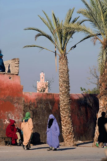 Palm trees in front of a fortified wall, Marrakesh, Morocco : Stock Photo