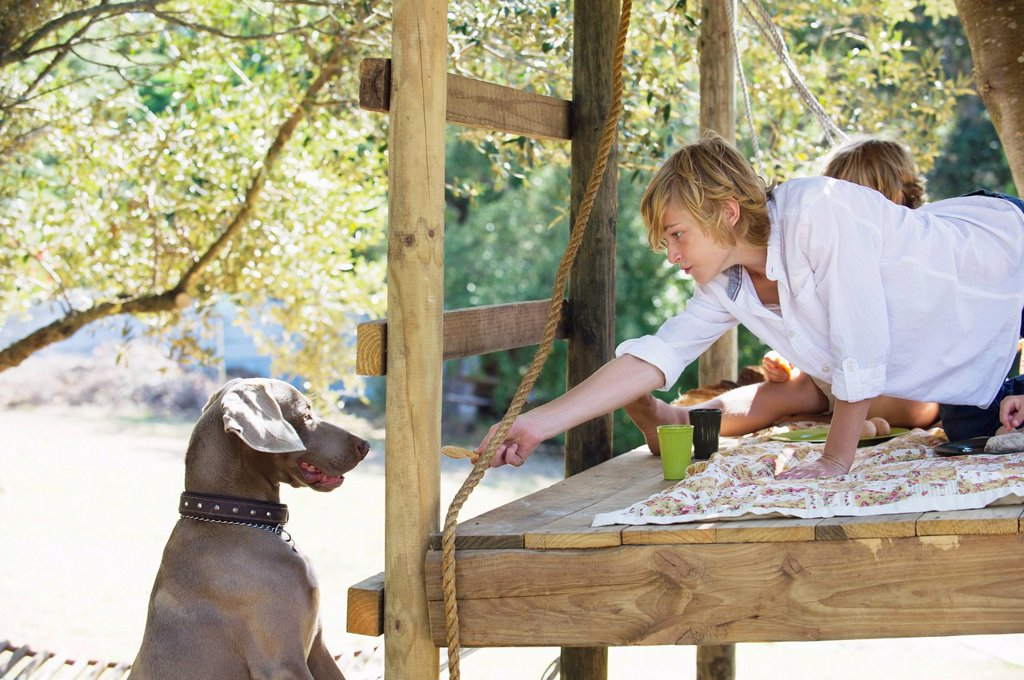 Boy feeding a dog from tree house : Stock Photo
