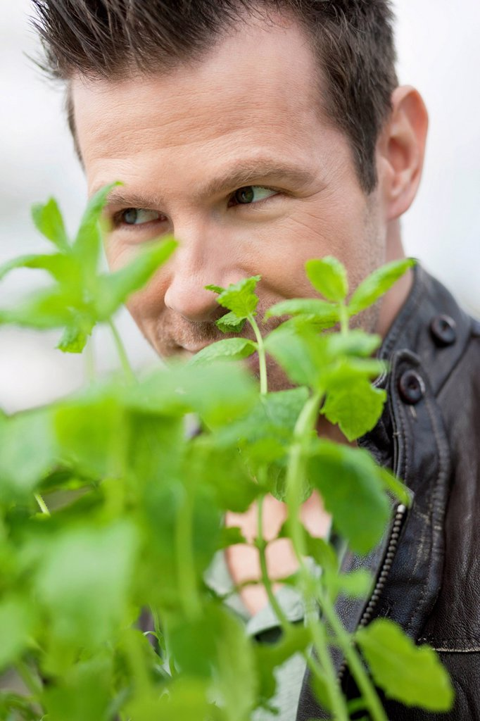 Stock Photo: 1738R-24735 Man smelling mint plant