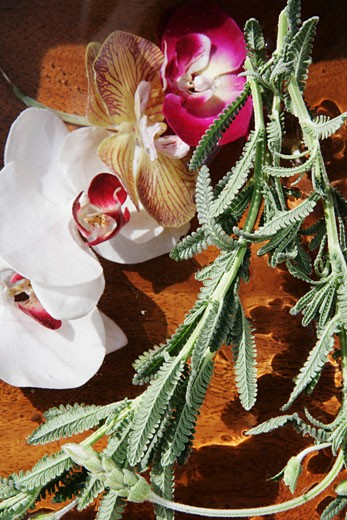 Close-up of Orchids  : Stock Photo