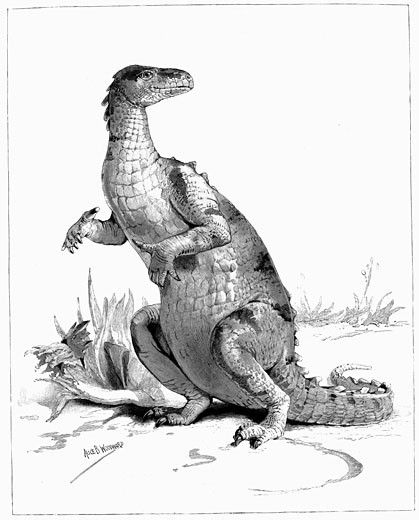 Reconstruction of Iguanadon, large herbivorous dinosaur, sketched from model on show at the Natural History Museum, London, From The Illustrated London News (London 1895), Engraving : Stock Photo