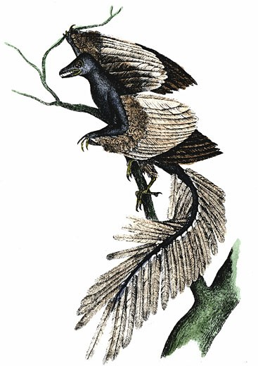 Archaeopteryx - The First Bird. Artist's reconstruction of archaeopteryx which made its appearance about 170 million years ago, based on fossil records. Print published 1886. Hand-coloured engraving : Stock Photo