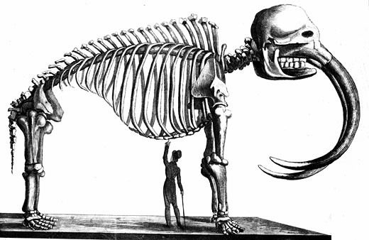 Stock Photo: 1746-2088 Skeleton of Mammoth discovered in 1817 by Dr Mitchell of New York at Goschen, Orange County and later assembled in the Philadelphia Museum. From Simeon Shaw Nature Displayed, London, 1823. Lithograph