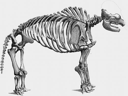 Stock Photo: 1746-2089 Skeleton of Giant Mastodon excavated by Wilson Peale of Philadelphia at Newburgh on the Hudson, 1801. From Cuvier The Animal Kingdom, London 1830. Engraving