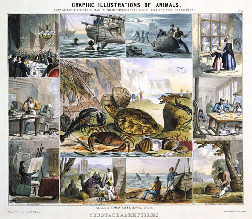 Stock Photo: 1746-2689 Graphic Illustrations of Animals and Their Utility to Man, CRUSTACEA: Turtle soup, pearl diving, catching turtles, leeches, tooth powder, pearl buttons, crab pots, shrimpers, Cowrie shell money, sepia and tortoise shells, Hand-coloured lithograph published London c.1850