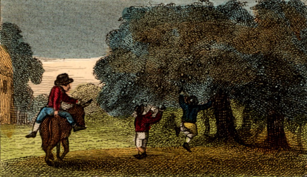 Stock Photo: 1746-4604 Harvesting cider apples, Herefordshire, England. Apples for cider are not carefully picked, they are knocked off the trees, or allowed to fall, and collected from the ground, then pressed and the juice fermented.   From Scenes in England by the Rev. Isaac Taylor, London, 1822. Hand-coloured engraving.