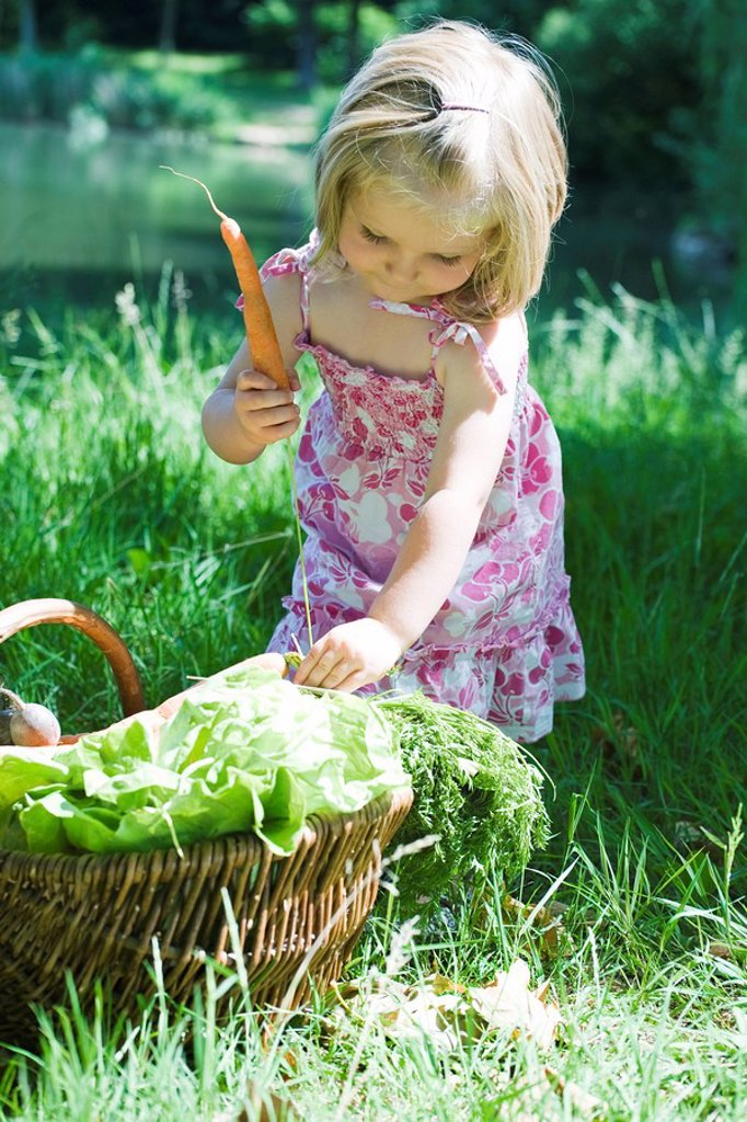 Little girl picking up carrots from basket of vegetables : Stock Photo