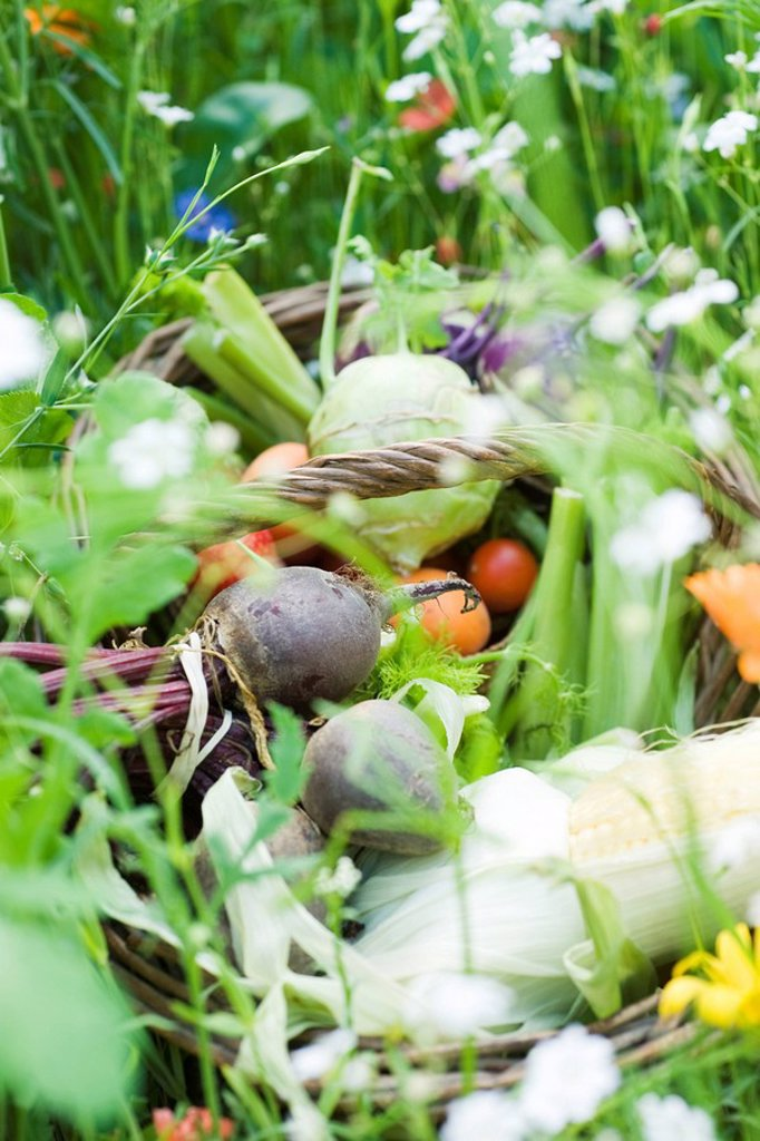 Basket of fresh produce in field of wildflowers : Stock Photo