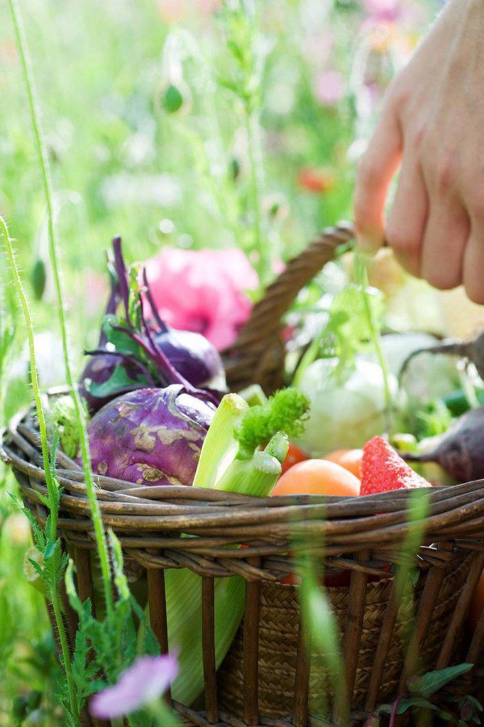 Hand holding basket of fresh produce : Stock Photo