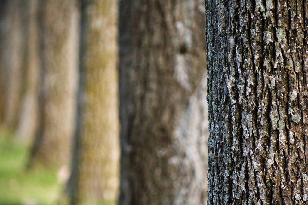 Tree trunks : Stock Photo