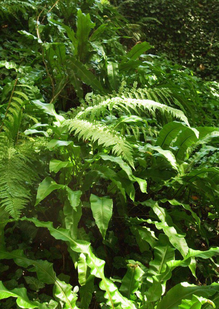 Ferns : Stock Photo