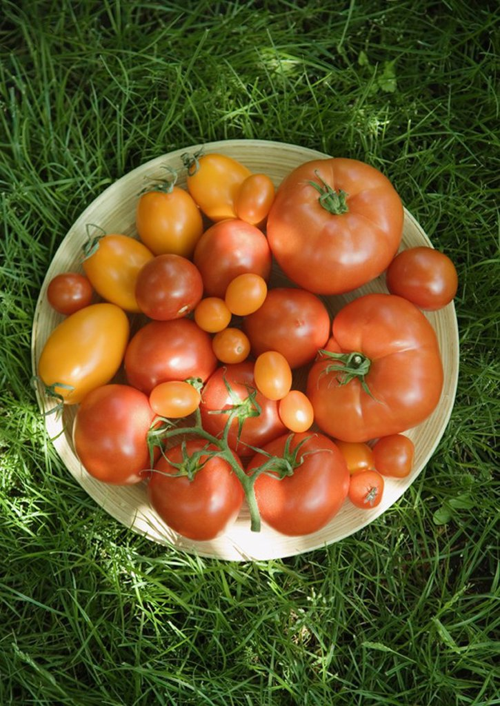 Assortment of tomatoes in bowl, on grass, high angle view : Stock Photo