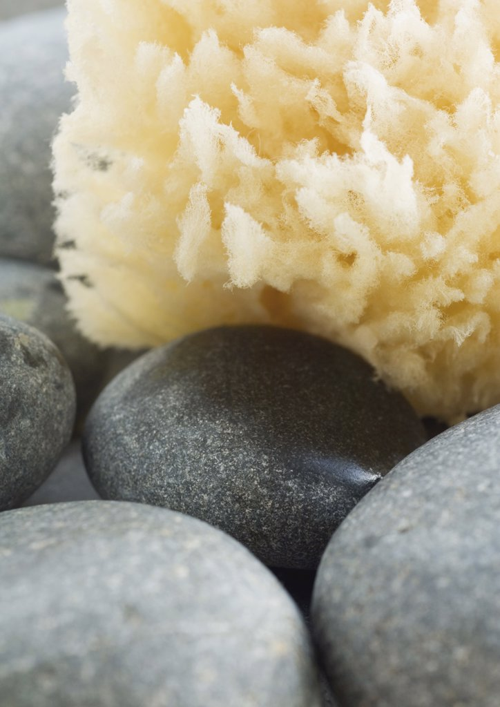 Stock Photo: 1747R-1408 Natural sponge and stones, extreme close-up