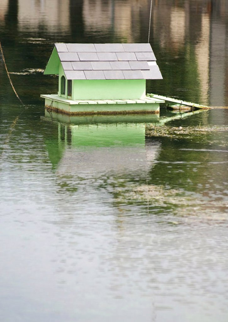 Duckhouse on pond : Stock Photo