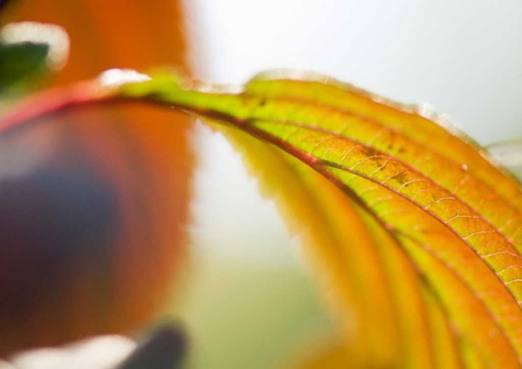 Leaf, extreme close-up : Stock Photo