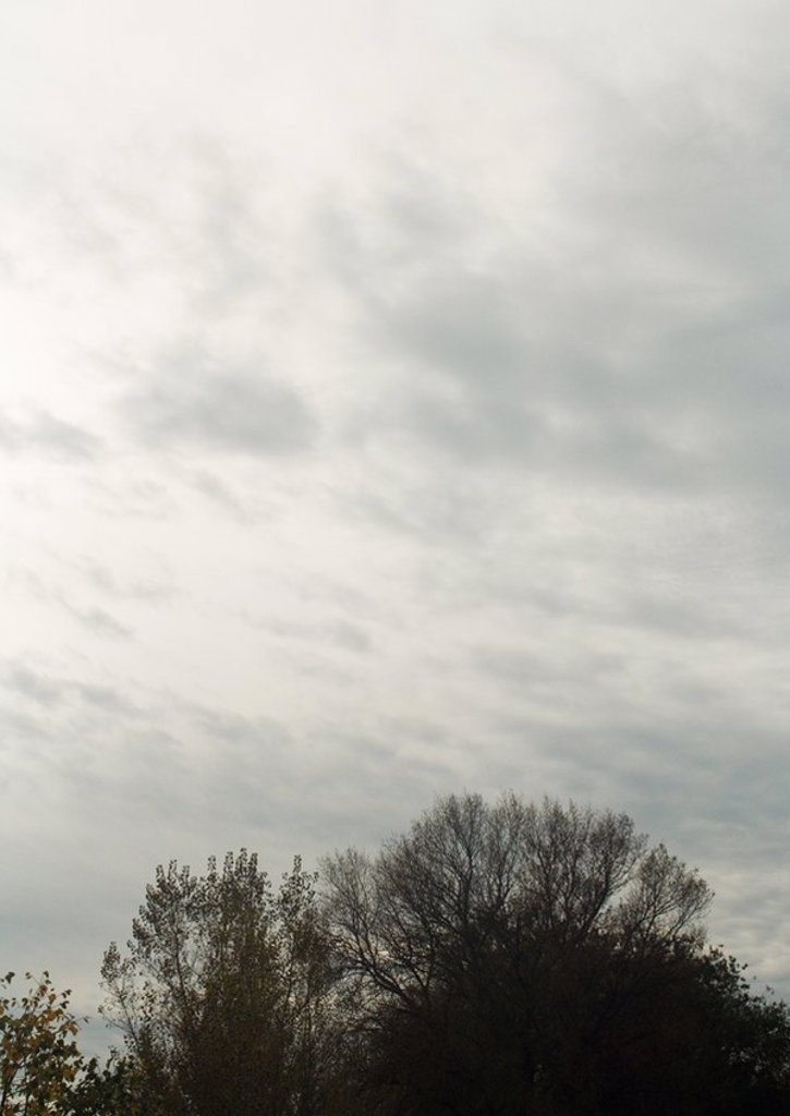 Stock Photo: 1747R-15388 Bare trees and sky
