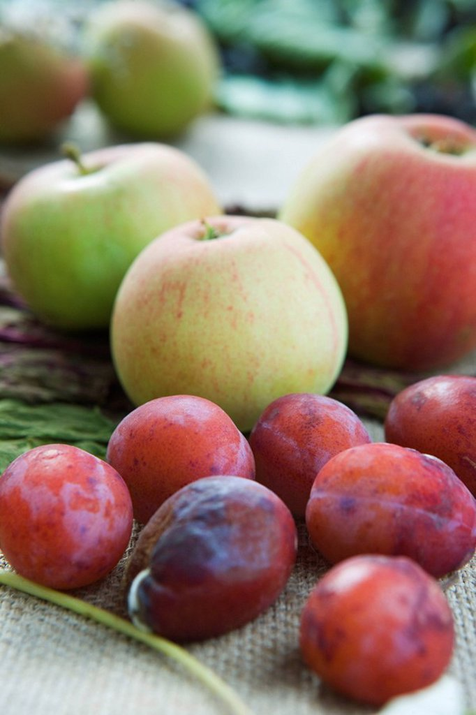 Apples and plums : Stock Photo