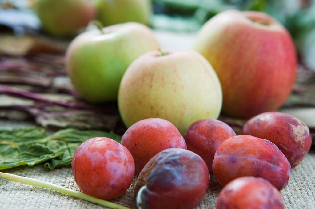 Stock Photo: 1747R-15737 Plums and apples