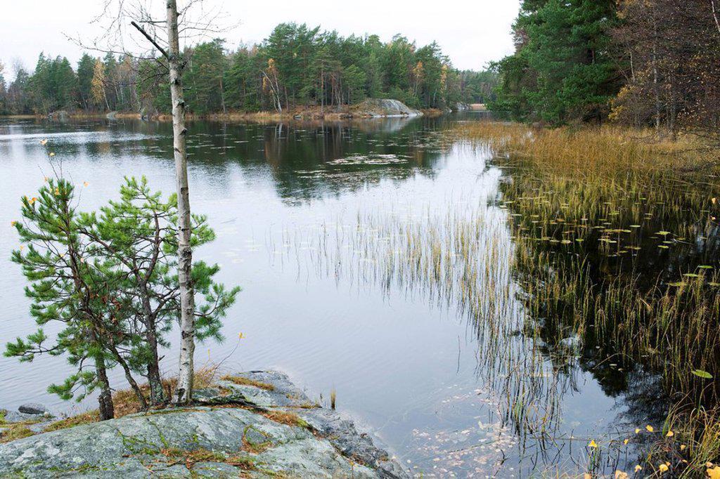 Tranquil lake scene : Stock Photo