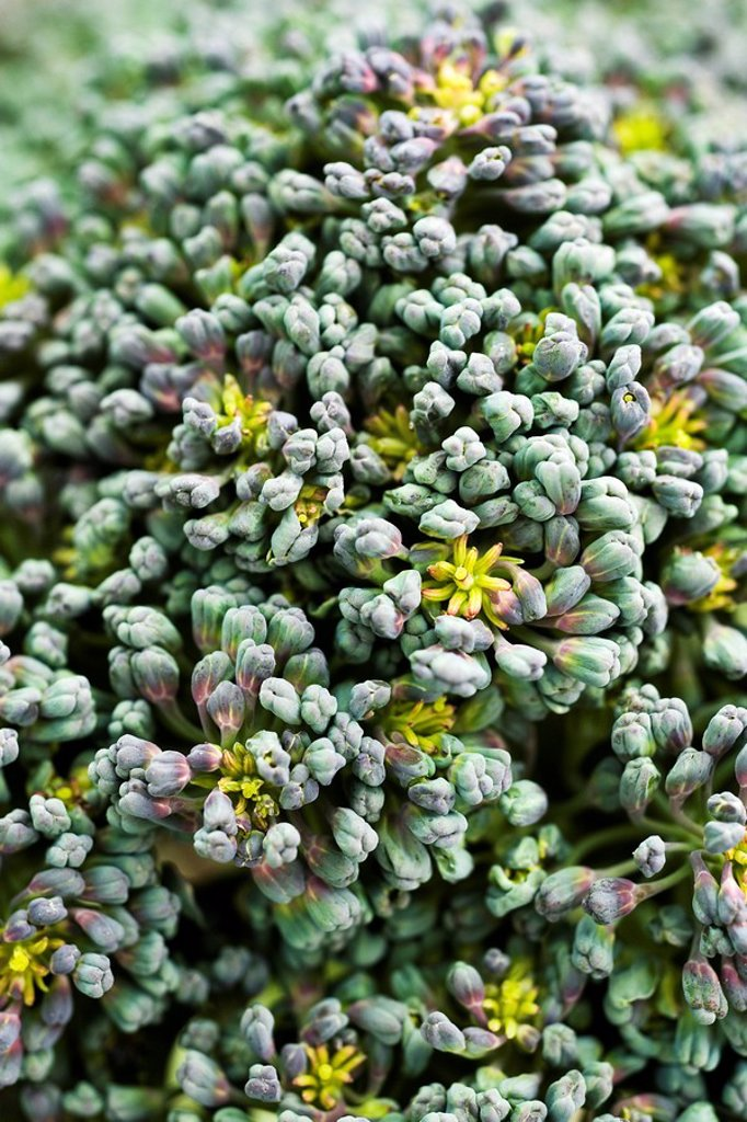 Broccoli florets, extreme close_up : Stock Photo