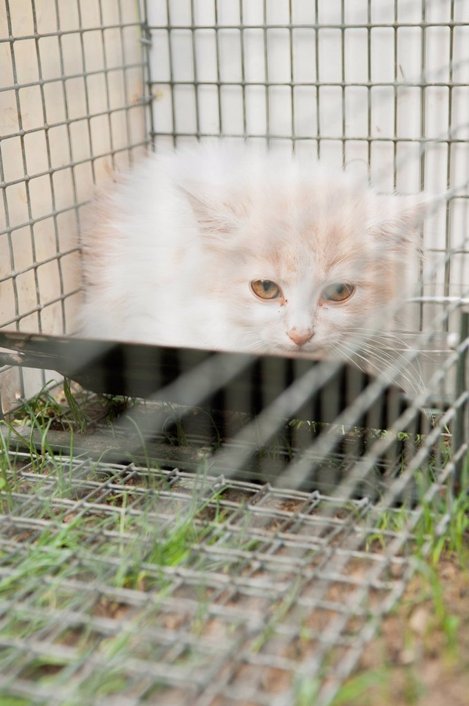 Stock Photo: 1747R-17323 Kitten in cage