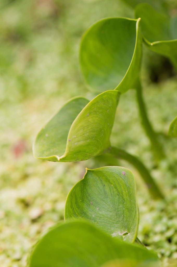 Stock Photo: 1747R-17940 Plants growing