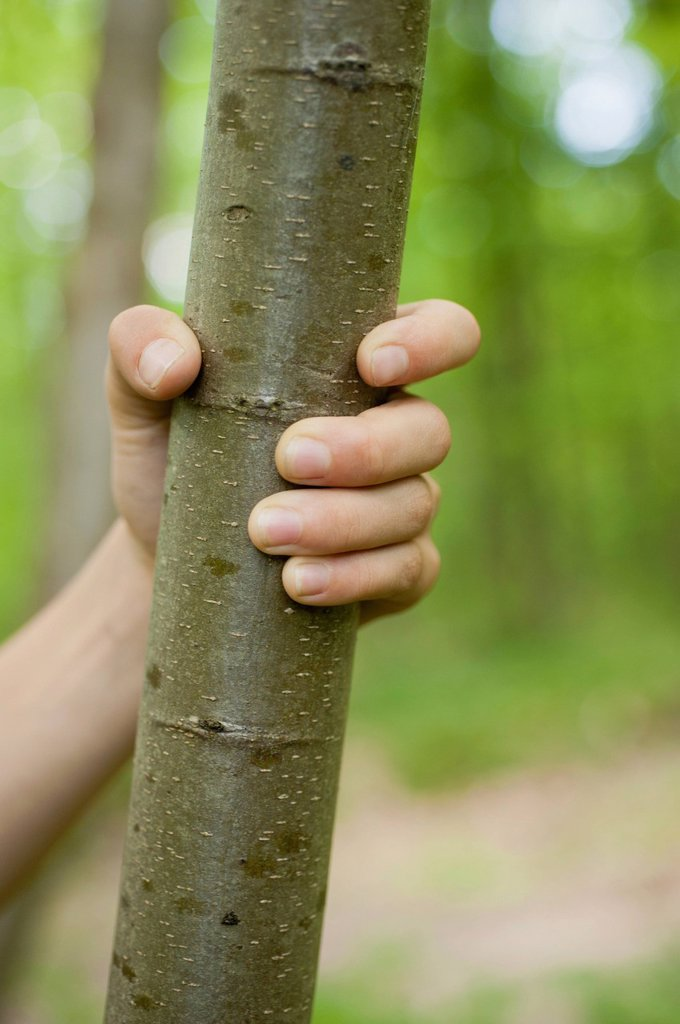 Child´s hand gripping tree trunk, cropped : Stock Photo