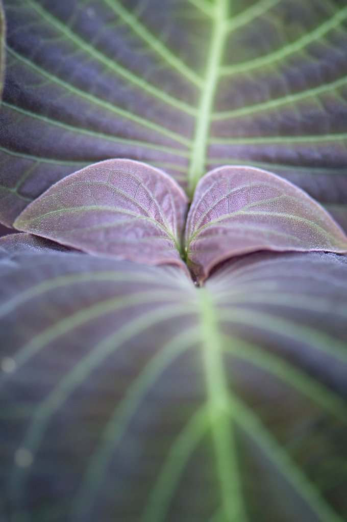 Stock Photo: 1747R-18048 Plant leaves, close_up